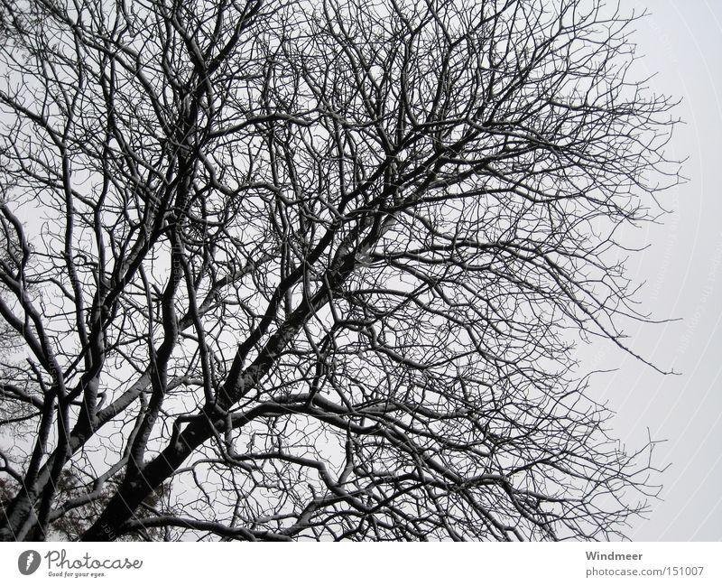 Schwarz auf Grau Baum Winter Wald kalt Schnee Sträucher Zweig kahl Geäst Holzmehl