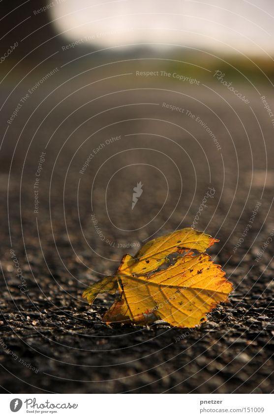 Gefallen Blatt Herbst Winter kalt welk gelb trocken Wege & Pfade Asphalt grau trist Baum mögen