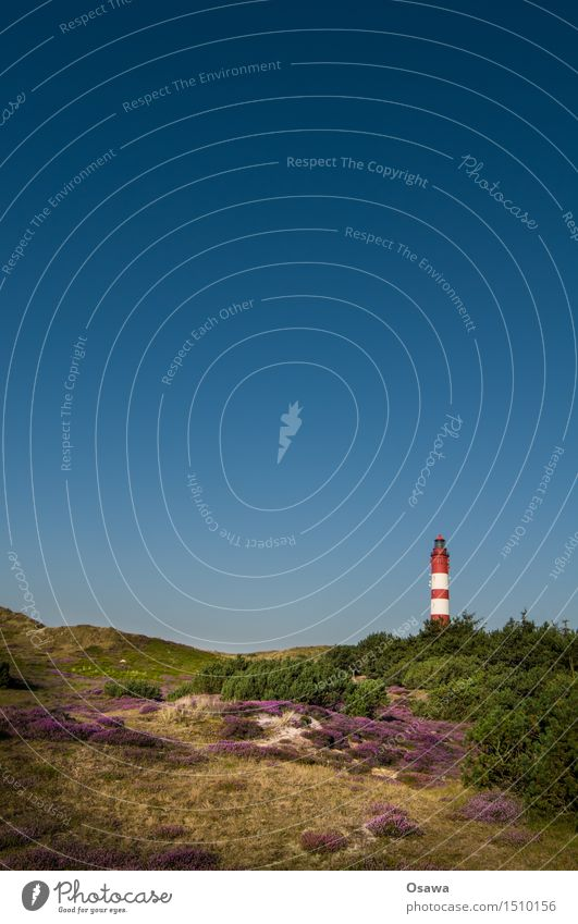 Amrum / Leuchtturm Himmel Natur Ferien & Urlaub & Reisen Pflanze Sommer Landschaft Umwelt Sommerurlaub Wolkenloser Himmel Stranddüne Heidekrautgewächse