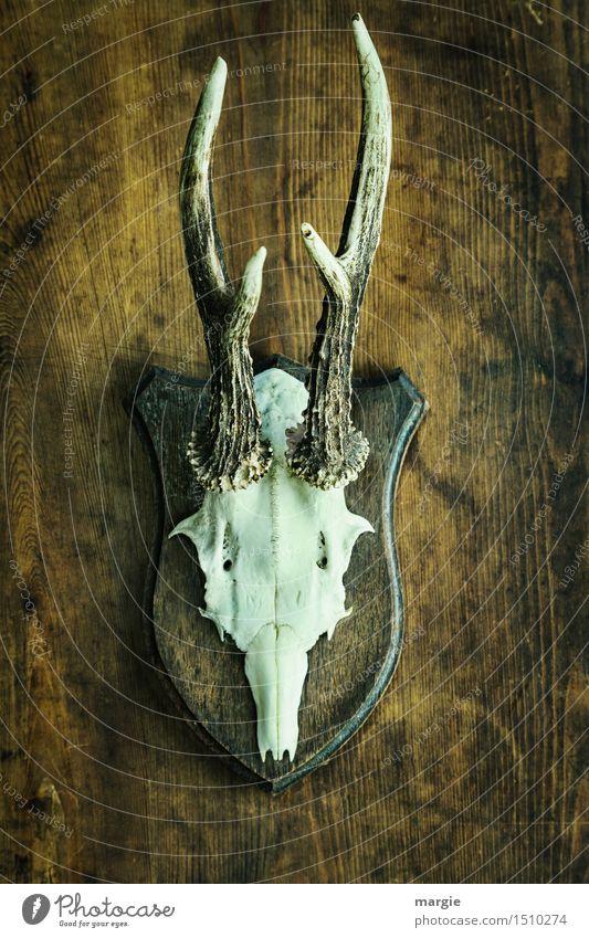Ahnengalerie - Das Geweih eines Rehbocks hängt an einer Holzwand Freizeit & Hobby Wildtier Tiergesicht 1 braun weiß Frustration Rache skurril Horn Jagd Jäger