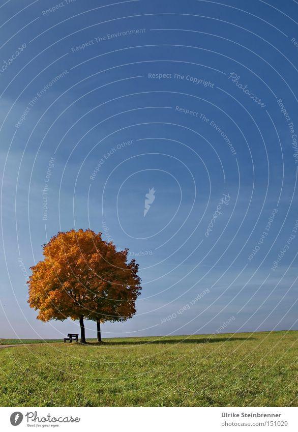 Einheit Himmel Natur blau grün Baum Landschaft Ferne Herbst Gras Glück 2 Feld Wachstum Textfreiraum stehen paarweise