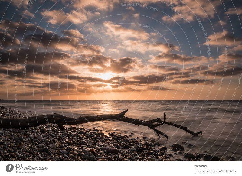 Treibholz an der Küste der Ostsee Erholung Ferien & Urlaub & Reisen Strand Meer Wellen Natur Landschaft Wasser Wolken Stein Holz Romantik Idylle Tourismus