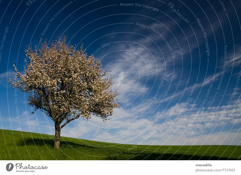 Frieden... Baum Wolken Apfelbaum Birnbaum Pol- Filter Wiese grün Ast Baumstamm Gras Wachstum Frucht Ernährung Frühling blühen frühling Lebensmittel
