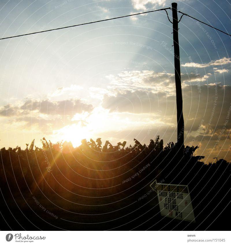 Chook-Bird-Dog Feld Sonnenuntergang Hinweisschild Strommast Telefonmast Leitung Beleuchtung Himmel Wolken Pfeil Schriftzeichen Weide Abend Sommer