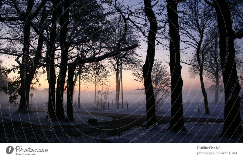 undurchschaubar Natur Himmel Baum rot Winter ruhig Straße Schnee Nebel Perspektive Ausfahrt