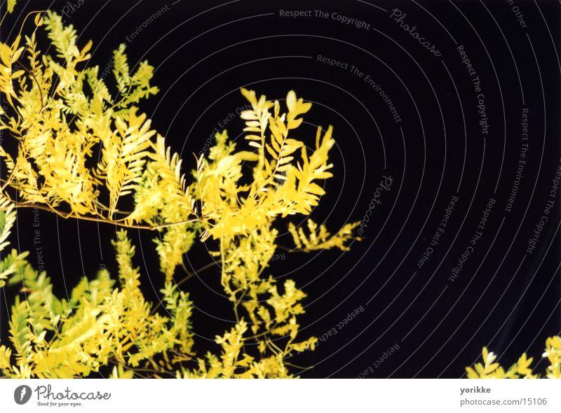 Blätter Blatt Herbst