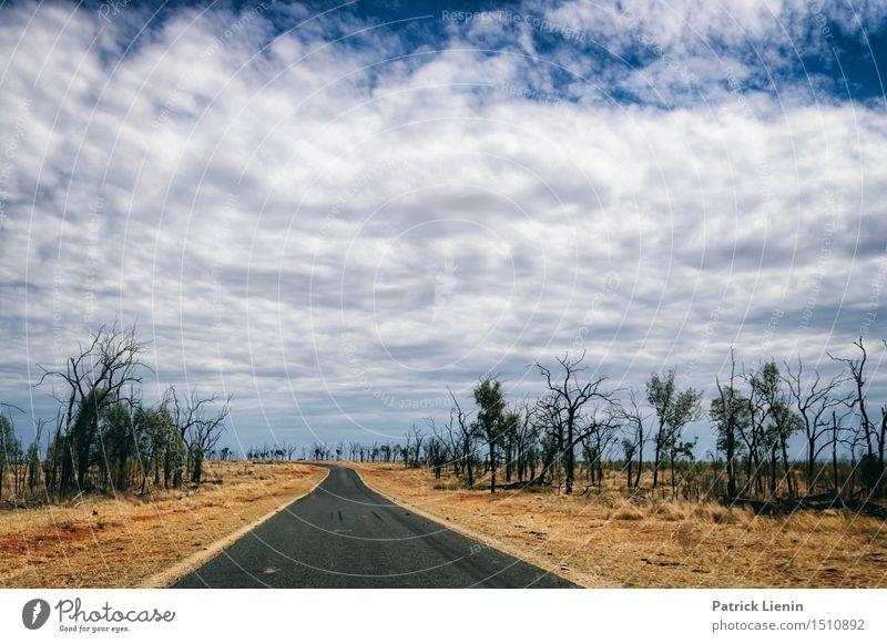 Roadtrip Himmel Natur Ferien & Urlaub & Reisen Pflanze schön Sommer Baum Erholung Landschaft Einsamkeit Wald Umwelt Straße Wetter Kraft Kreativität