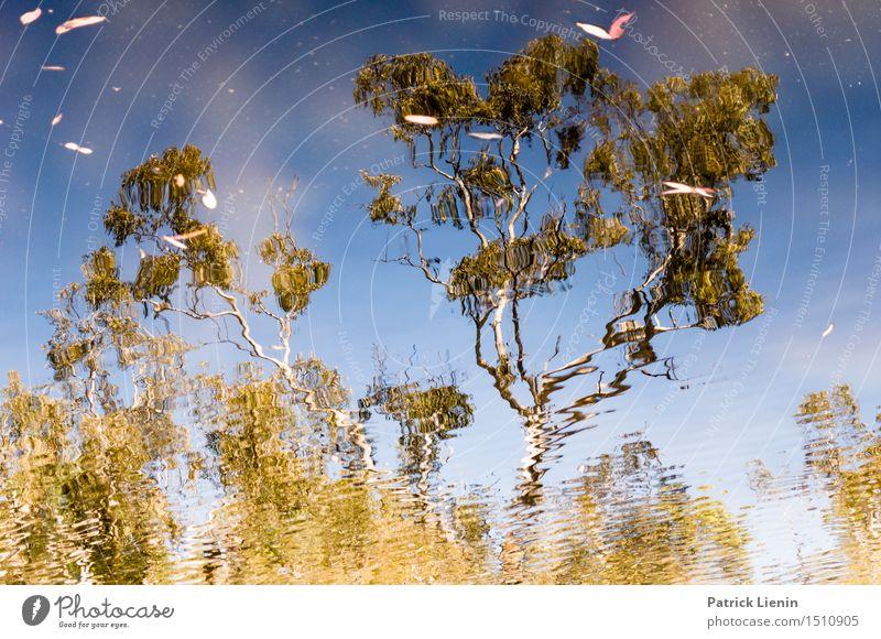 Eukalyptus Baum Natur Ferien & Urlaub & Reisen Sommer schön Landschaft Erholung Wald See Park Platz Abenteuer Gelassenheit Fernweh Spiegel Teich