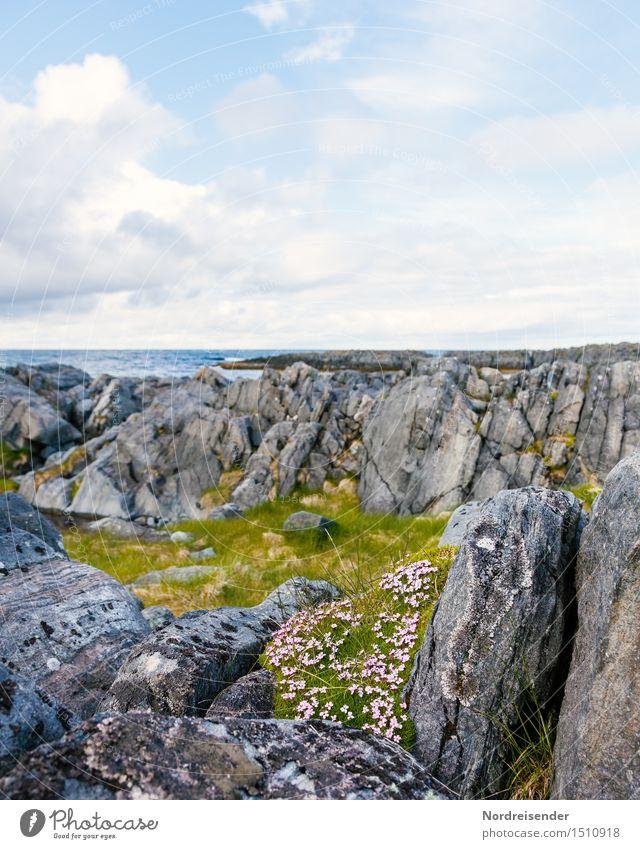 Sommer an der Barentssee Himmel Natur Pflanze schön Blume Meer Landschaft Wolken ruhig Ferne kalt Leben Frühling Gras Küste