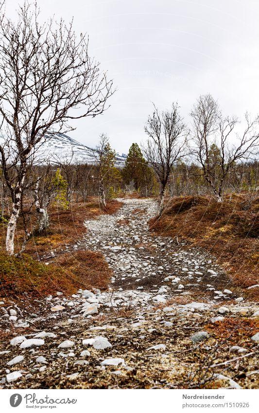 Furt Abenteuer Ferne Freiheit Berge u. Gebirge wandern Natur Landschaft Pflanze Urelemente Klima schlechtes Wetter Regen Baum Straße dunkel ruhig Ausdauer