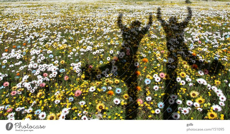Blume Freude Leben Frühling springen Tanzen frisch Schatten Begeisterung Aufregung Lebensfluss