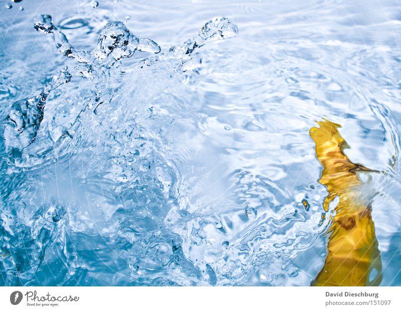 Ich liebe Bier Wasser blau gelb Kontrast Wassertropfen Tropfen Wellen spritzen Reflexion & Spiegelung fallen Banane Schifffahrt Frucht Farbe water reflektion