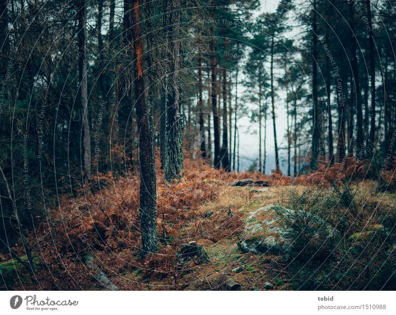 Urwald Natur Landschaft Pflanze schlechtes Wetter Baum Gras Sträucher Moos Wald Hügel Felsen dunkel kalt Ferne welk Baumrinde Waldlichtung herbstlich verdorrt