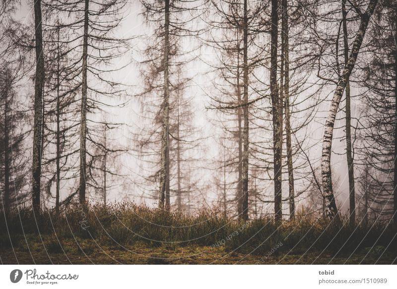 Trist Natur Pflanze Baum Landschaft Einsamkeit Winter Wald kalt Herbst Gras Nebel trist Baumstamm Halm kahl trüb