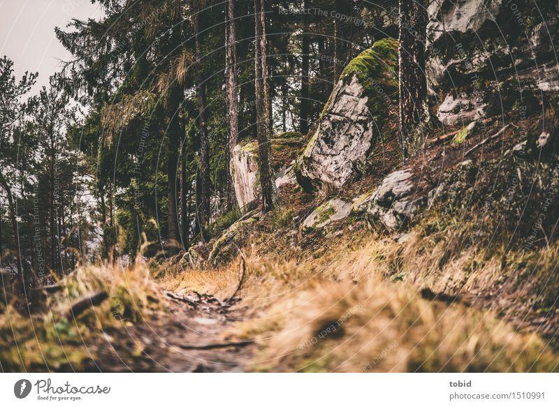 Pfade Natur Landschaft Pflanze Baum Gras Sträucher Moos Wald Hügel Felsen Wege & Pfade verwittert welk Forstwirtschaft trist nah Farbfoto Außenaufnahme