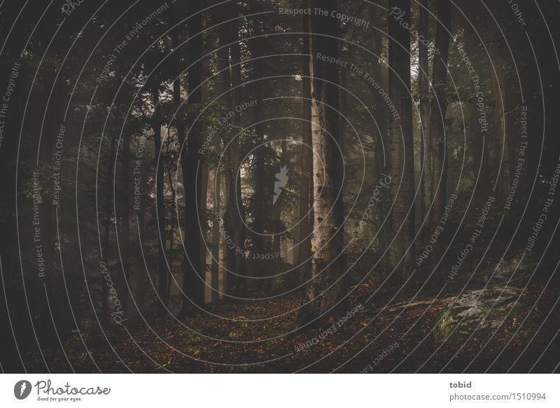 Wald Natur Landschaft Pflanze Baum Moos Hügel Felsen dunkel Einsamkeit Idylle Baumstamm Blatt Herbstlaub mystisch Lichteinfall malerisch authentisch nah