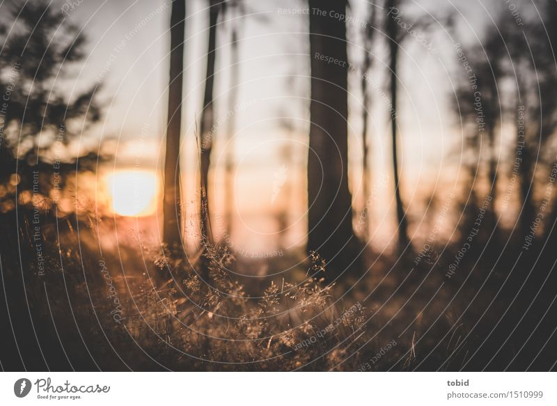 Sunset Natur Landschaft Pflanze Himmel Horizont Sonne Sonnenaufgang Sonnenuntergang Schönes Wetter Baum Gras Sträucher Wiese Wald Ferne Unendlichkeit hell nah