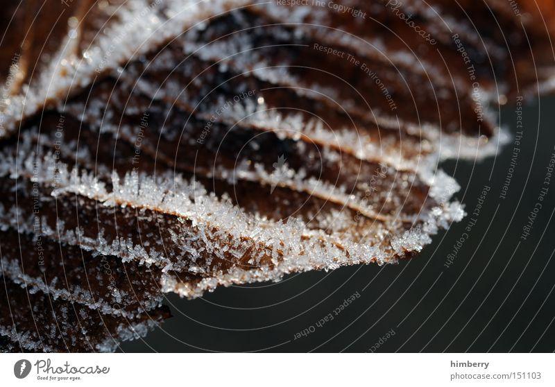 frostbeulen Natur Winter kalt Schnee Herbst Eis Frost Jahreszeiten Ruhestand Kristallstrukturen Raureif Eiskristall Grad Celsius Temperatur Eiszeit