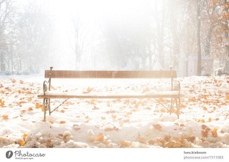 sit down and enjoy winter Natur Weihnachten & Advent Baum Sonne Erholung Blatt ruhig Winter kalt Schnee Schneefall Park Tourismus Zufriedenheit Eis leuchten