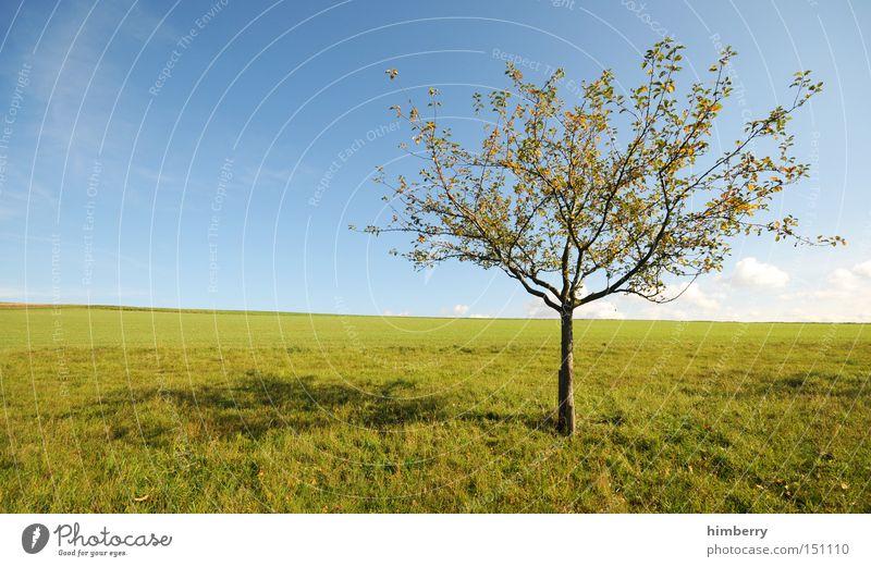 baumstelle Natur Himmel Baum Ferien & Urlaub & Reisen ruhig Erholung Wiese Landschaft Wetter Frieden Freizeit & Hobby Landwirtschaft Jahreszeiten Obstbaum