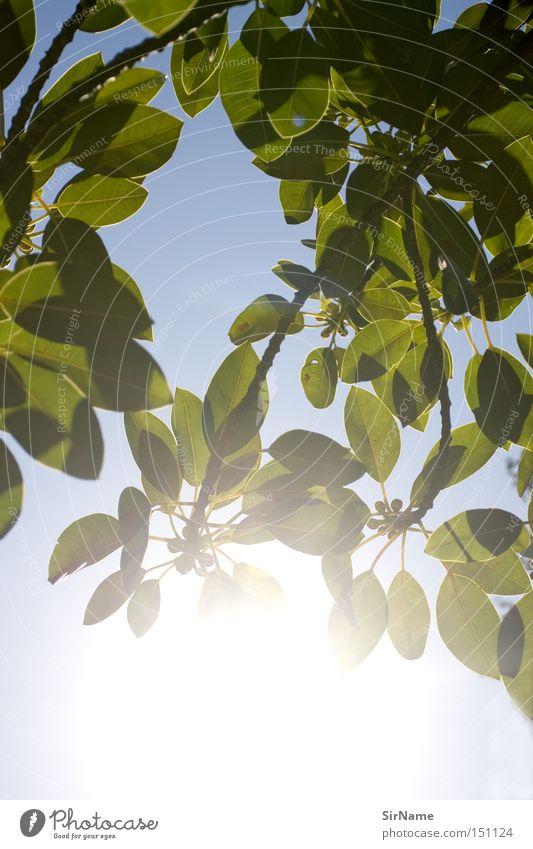 25 [picknickblick 1] Freude Erholung ruhig Freizeit & Hobby Spielen Ferien & Urlaub & Reisen Freiheit Sommer Sonne Himmel Baum Blatt authentisch frei heiß hell