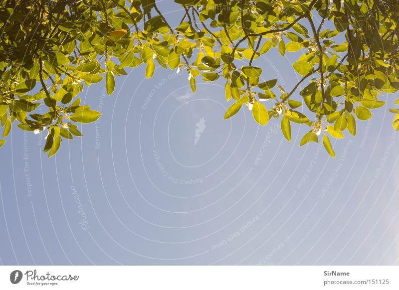 26 [picknickblick 2] Himmel Ferien & Urlaub & Reisen blau grün Erholung Blatt ruhig Wärme natürlich Freiheit Zufriedenheit Freizeit & Hobby frisch authentisch
