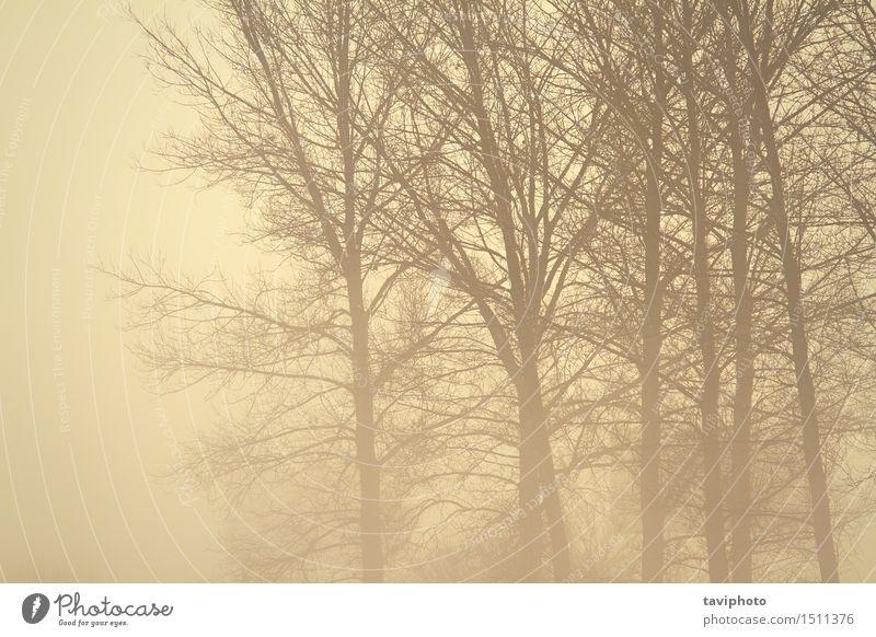 gruseliger Wald im Nebel Natur schön Baum Landschaft dunkel schwarz Umwelt Herbst natürlich Regen träumen Wetter Angst trist