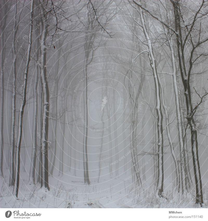 LandLeben Wald Unterholz dunkel Baum Nebel Schnee kalt Märchen mystisch Hexe Eifel Winter Baumstamm Trauer Verzweiflung