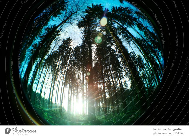Lichtblick Natur Baum Sonne Wald kalt Herbst Fischauge hoch