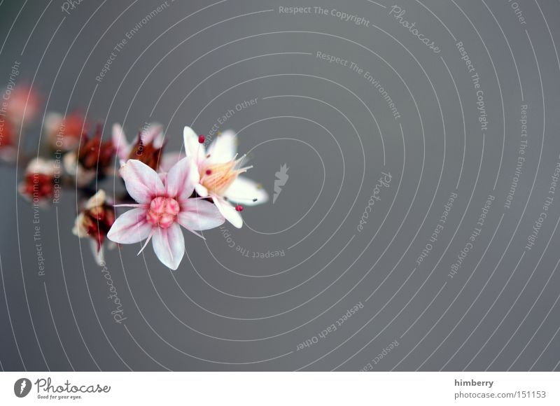 refresh Blume Natur Frühling frisch Gartenbau Pflanze schön ästhetisch Hintergrundbild Floristik