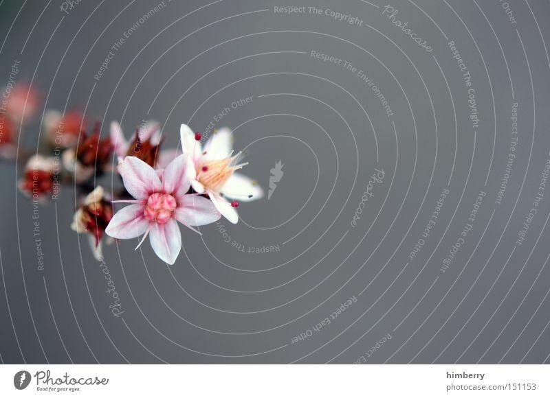 refresh Natur Pflanze schön Blume Frühling Hintergrundbild frisch ästhetisch Floristik Gartenbau
