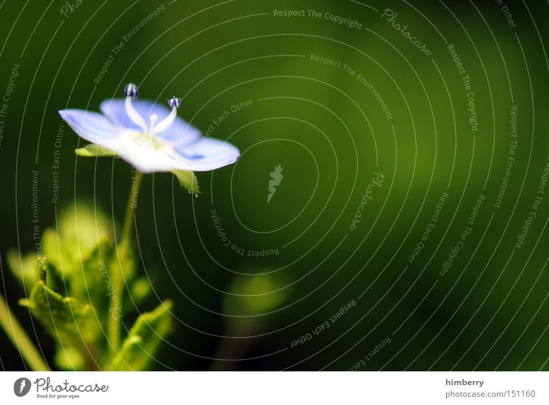sidestep Natur Pflanze schön Blume Frühling Hintergrundbild Park frisch ästhetisch Floristik Gartenbau