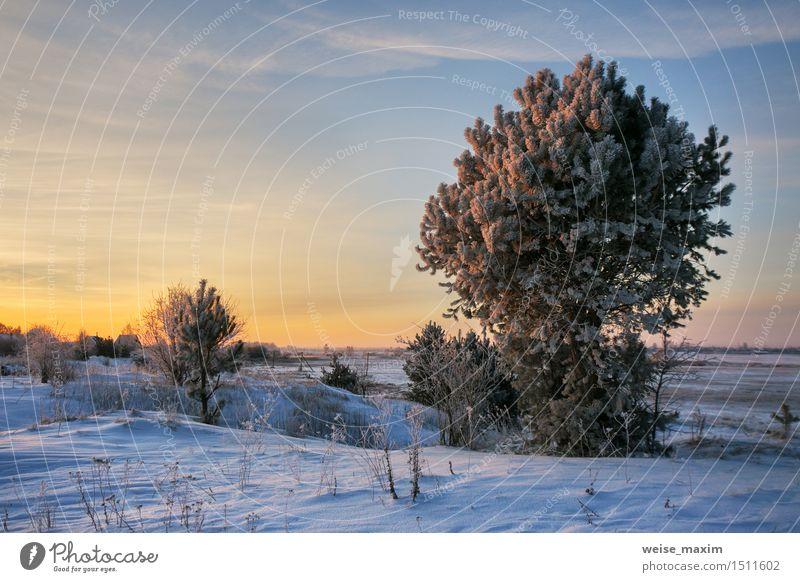 Wintermorgen Schnee Garten Natur Landschaft Pflanze Himmel Wolken Horizont Eis Frost Baum Sträucher Wiese blau gelb schwarz weiß kalt Aussicht Hintergrund Holz