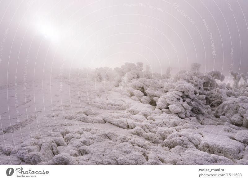 Frost auf dem Gras. Winternebel in der Nähe von Kraftwerk. Schwimmbad Sonne Schnee Garten Natur Landschaft Himmel Nebel Eis Sträucher Wiese grau weiß Januar