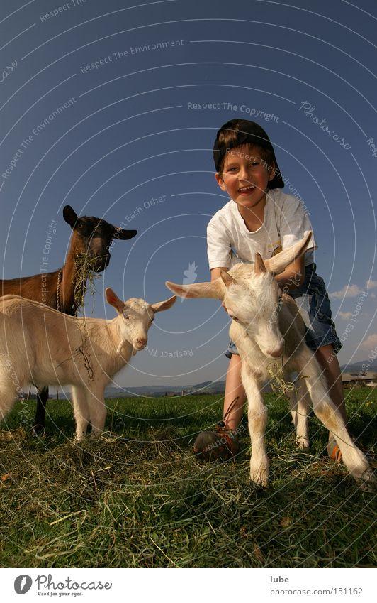 Ziegenpeter Freude Landwirtschaft Hirte Milcherzeugnisse Geißbock