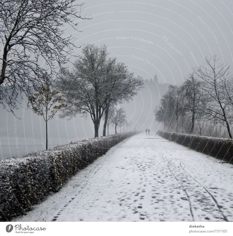 Schwarzweiße Winterromantik Baum ruhig kalt Schnee grau Paar Wege & Pfade Park Nebel Trauer paarweise Romantik Spuren Verzweiflung