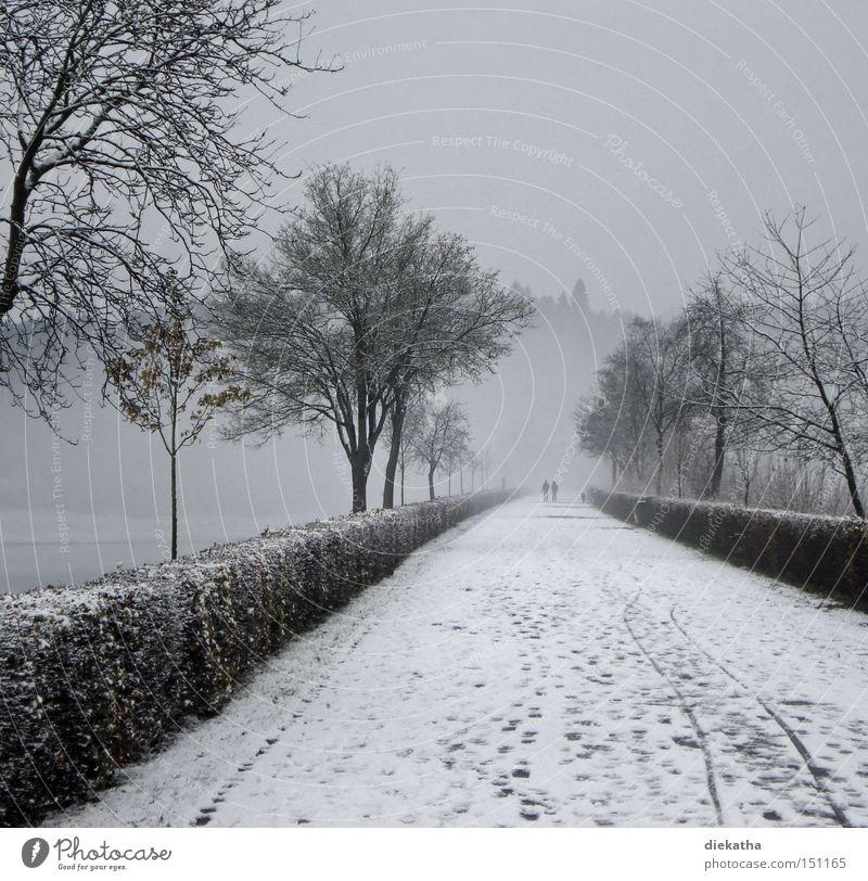 Schwarzweiße Winterromantik Schnee grau Nebel Paar Romantik ruhig Spuren Wege & Pfade geradeaus Baum kalt Trauer Verzweiflung Park paarweise