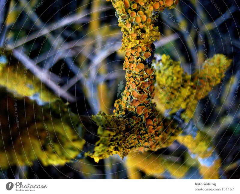 die Pflanze auf der Pflanze Natur grün gelb Herbst Holz grau orange Ast Kontrast Zweig Geäst Zweige u. Äste bewachsen Flechten