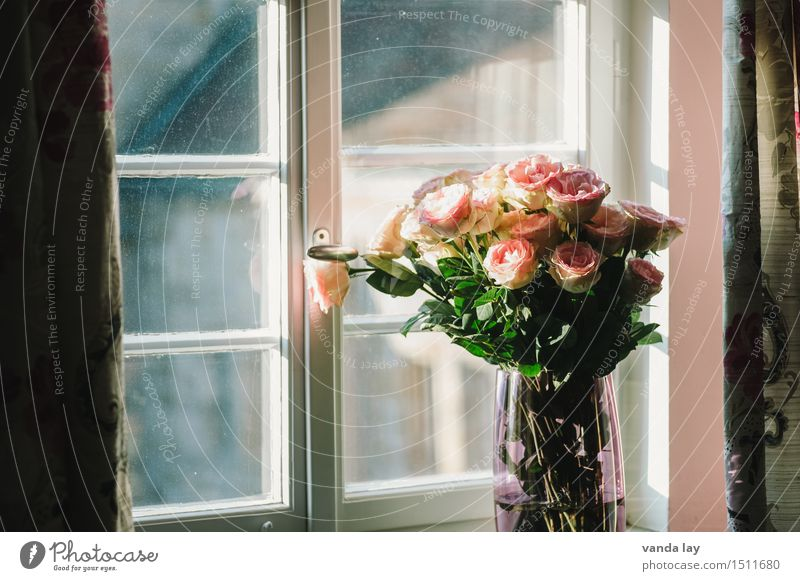 opulent Lifestyle Reichtum elegant Stil Design Erholung Häusliches Leben Wohnung Raum Wohnzimmer Schlafzimmer Valentinstag Muttertag Hochzeit Blume Rose Blühend