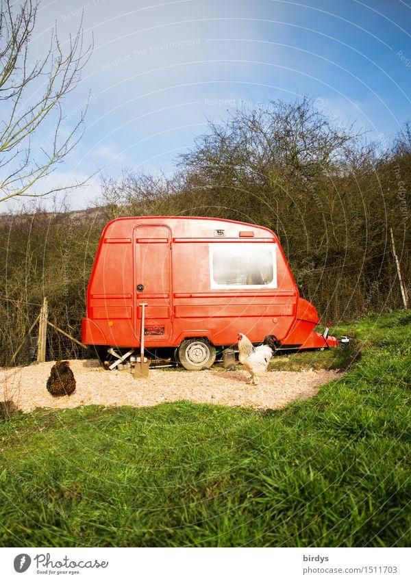 rote mobile Minifarm Lifestyle Häusliches Leben Traumhaus Garten Natur Himmel Herbst Winter Wiese Wald Wohnwagen Haushuhn 2 Tier Spaten leuchten außergewöhnlich
