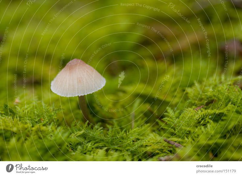 schwammerl grün Herbst Vergänglichkeit Hut feucht Pilz Moos Samen fruchtbar