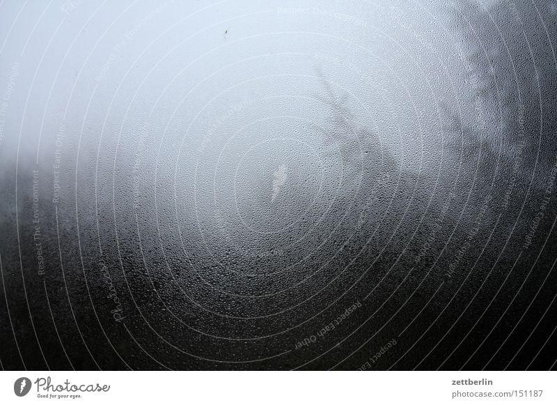 Dunst Baum Herbst Fenster Regen Glas Nebel Wassertropfen Tropfen Häusliches Leben Ast Fensterscheibe Zweig Scheibe Dunst November Dezember