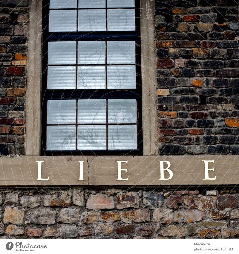 Yellow Bird Liebe Fenster Wand Glück Traurigkeit Mauer träumen Stimmung Zusammensein Fassade Herz Schriftzeichen Wandel & Veränderung Hoffnung Buchstaben