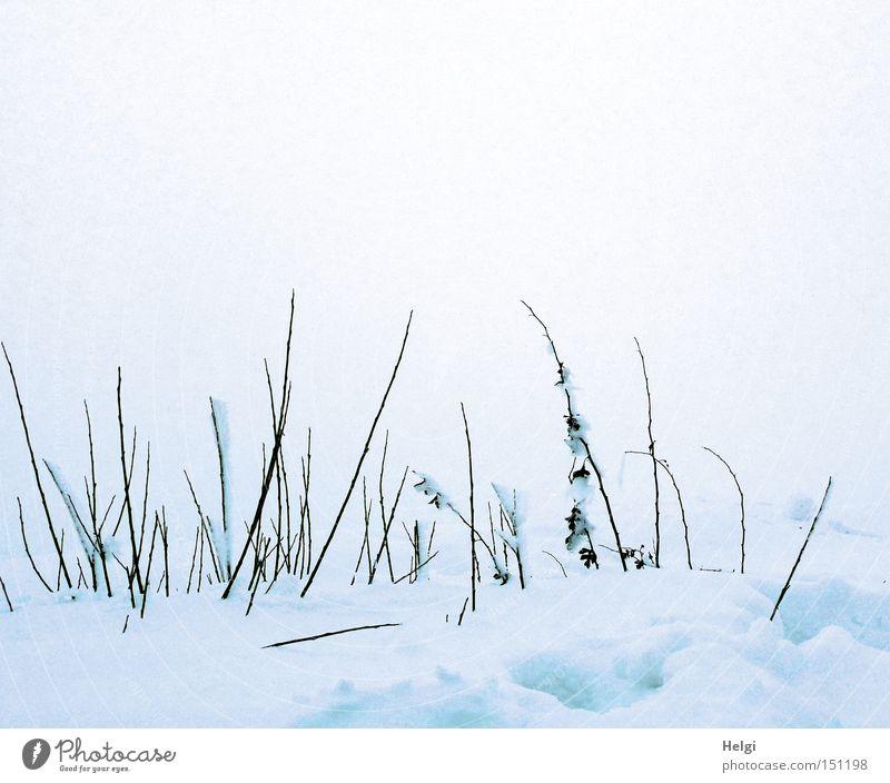 tiefster Winter... Natur weiß kalt Schnee braun Nebel Wetter Frost Spaziergang dünn Vergänglichkeit lang Gras Halm Zweig