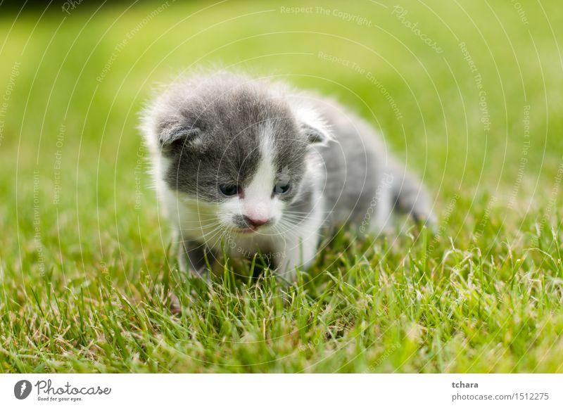 Kätzchen schön Spielen Garten Baby Tier Gras Fell Haustier Katze 1 Tierjunges Liebe klein lustig niedlich grau grün Katzenbaby heimisch Hintergrund süß