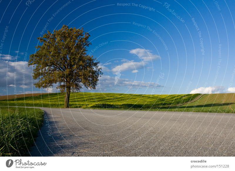 Streckenposten Baum Herbst Blatt färben verlieren Straße Verkehr Wolken Himmel Wiese Feld Landwirtschaft bebauen Verkehrswege