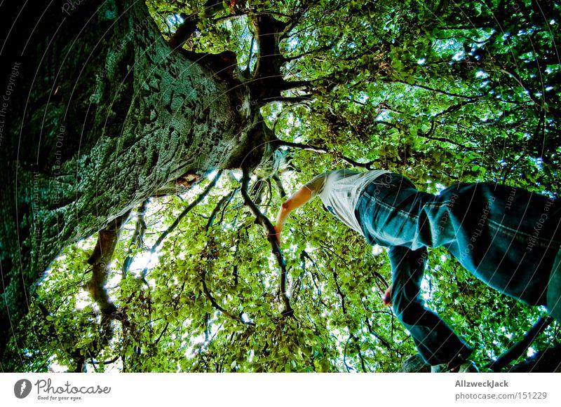 tarzan aus der käferperspektive Natur Baum grün Freude Blatt Wald Mensch Froschperspektive Klettern Ast Perspektive Baumkrone Baumrinde Blätterdach Waldmensch