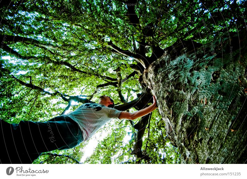 Naturbursche Wald Baum Blatt grün Blätterdach Baumkrone Klettern Baumrinde Ast Froschperspektive Waldmensch Fischauge Sommer