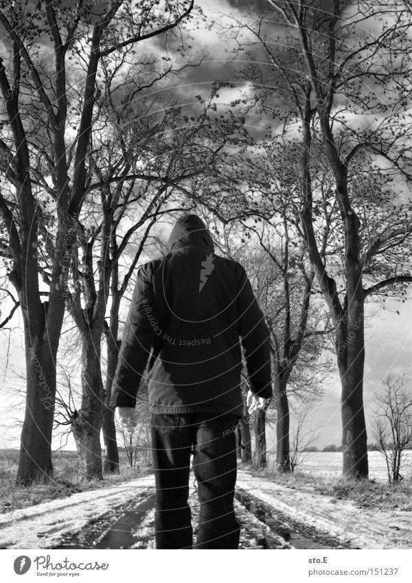 kalt Mensch Himmel Baum Winter Wolken Straße Schnee Wege & Pfade Stimmung wandern trist Allee Geäst