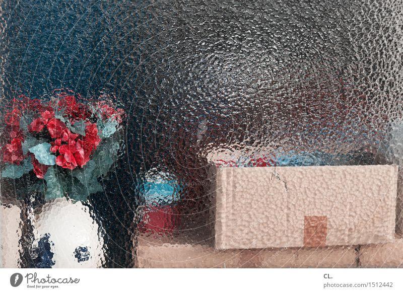 hinter glas Blume Fenster Dekoration & Verzierung Glas ästhetisch Umzug (Wohnungswechsel) Blumenstrauß Schalen & Schüsseln Verpackung Kasten Karton einrichten
